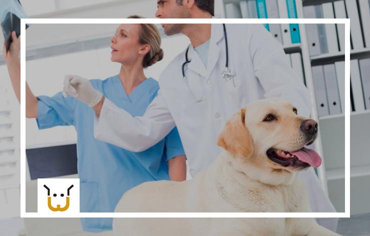 Como Gerenciar Uma Clínica Veterinária de Animais de Grande Porte