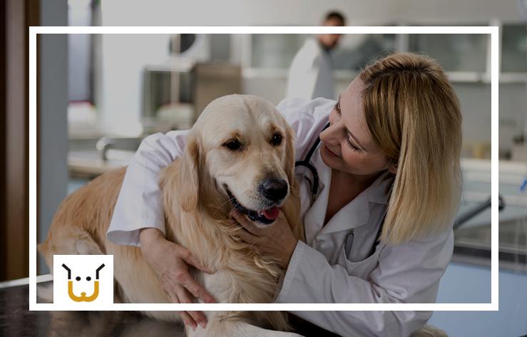 Depois da Castração de Cachorro Cuidados São Necessários?