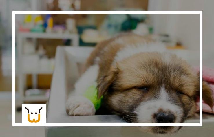 Equipamentos Para Pet Shop: Quais São os Ideais?