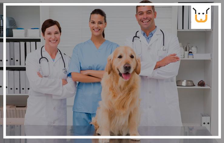 Como Melhorar o Atendimento Utilizando um Sistema Para Pet Shop?