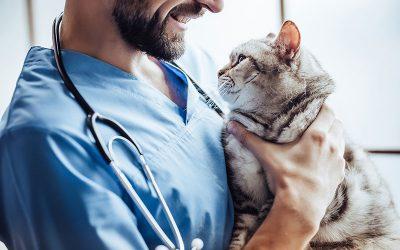 gestao veterinaria