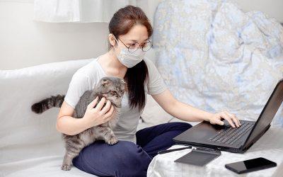inovacoes do mercado pet
